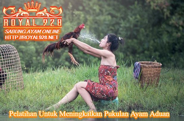 Pelatihan Untuk Meningkatkan Pukulan Ayam Aduan