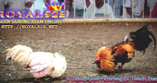 3 Jenis Ayam Petarung Di Takuti Dunia