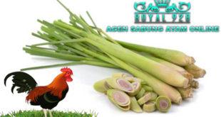 Kegunaan Daun Serai Untuk Ayam Aduan
