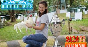 Fakta Menarik Mengenai Ayam Putih Kinantan