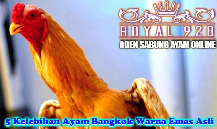 5 Kelebihan Ayam Bangkok Warna Emas Asli