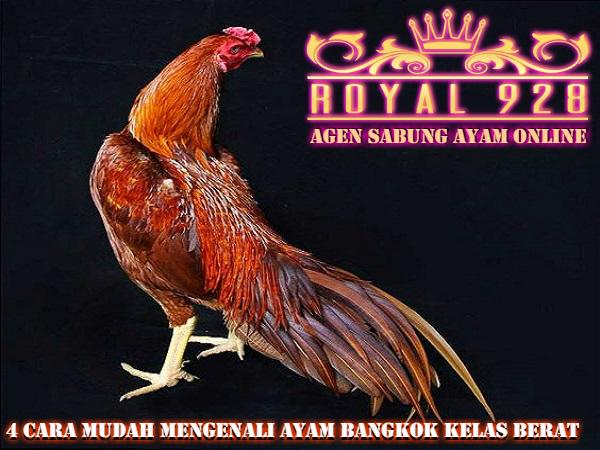 4 Cara Mudah Mengenali Ayam Bangkok Kelas Berat