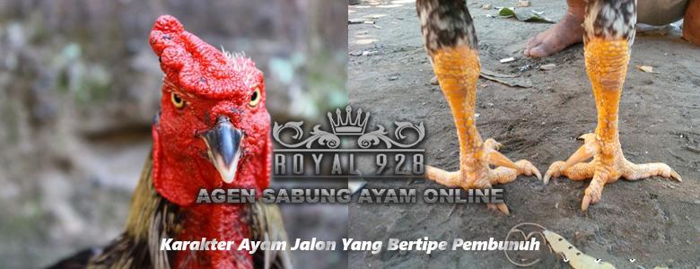 Karakter Ayam Jalon Yang Bertipe Pembunuh