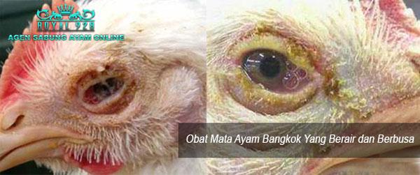 Agen Sabung Ayam Online Obat Mata Ayam Bangkok Yang Berair dan Berbusa