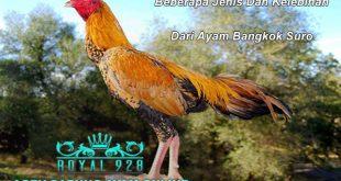 Beberapa Jenis Dan Kelebihan Dari Ayam Bangkok Suro