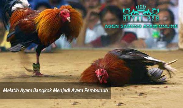 Agen Sabung Ayam Online - Melatih Ayam Bangkok Menjadi Ayam Pembunuh