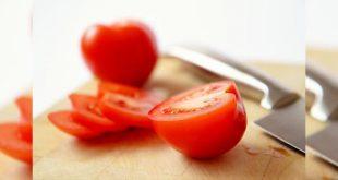 Khasiat Tomat Sebagai Pakan Tambahan Ayam Aduan