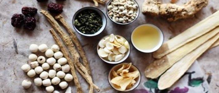 Beberapa Jenis Tanaman Obat Untuk Kesehatan Sabung Ayam Anda