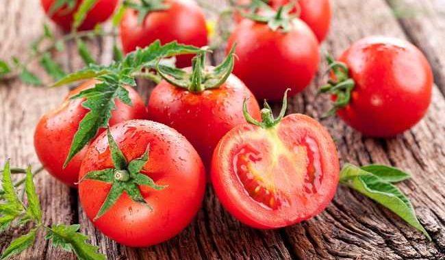 Manfaat-Tomat-Sebagai-Pakan-Tambahan-Ayam-Aduan